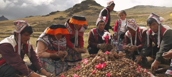 Potato Park of Peru